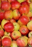 Modelo rojo de la manzana Foto de archivo libre de regalías