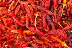 Modelo rojo secado de los chiles Imagenes de archivo