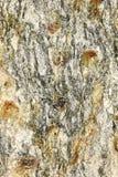 Modelo rugoso en un pedazo de mineral Fotografía de archivo libre de regalías