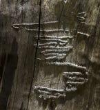 Modelo Squiggly en un tronco de árbol muerto Imagen de archivo libre de regalías