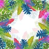 Modelo tropical con las hojas, ejemplo del verano del vector Foto de archivo
