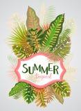 Modelo tropical con las hojas, ejemplo del verano del vector Imagen de archivo libre de regalías