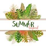 Modelo tropical con las hojas, ejemplo del verano del vector Fotos de archivo