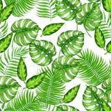 Modelo tropical de la acuarela stock de ilustración