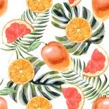 Modelo tropical de la acuarela con la naranja en un fondo blanco stock de ilustración