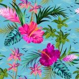 Modelo tropical de las palmeras del vector Foto de archivo