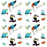 Modelo tropical de los pájaros Fotos de archivo libres de regalías