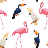 Modelo tropical de los pájaros Textura inconsútil del vector Foto de archivo libre de regalías