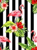 Modelo tropical del flamenco y del hibisco, fondo rayado stock de ilustración