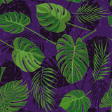Modelo tropical dibujado mano inconsútil con las hojas de palma, hoja exótica de la selva en fondo oscuro Fotografía de archivo