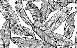 Modelo tropical inconsútil con las hojas del plátano Vector drenado mano imagen de archivo libre de regalías