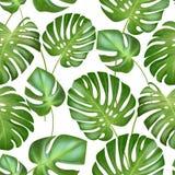Modelo tropical inconsútil de las hojas del vector hojas fuertes de los verdes de la planta exótica del monstera Ejemplo retro de stock de ilustración