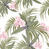 Modelo tropical verde claro libre illustration