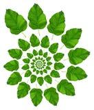 Modelo verde de la hoja Imágenes de archivo libres de regalías