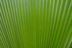 Modelo verde de la hoja Fotografía de archivo
