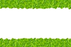 Modelo verde de la hoja aislado Imagen de archivo libre de regalías