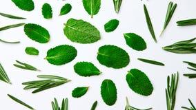 Modelo verde de las hojas y del romero de menta en un fondo blanco Fondo natural Endecha plana fotos de archivo libres de regalías