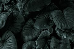 Modelo verde oscuro de la hoja en tono negro foto de archivo libre de regalías