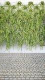 Modelo vertical de la planta verde en muchos pote negro Foto de archivo