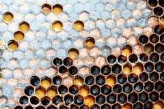 Modelo y miel del panal del hexágono de la colmena de la abeja Fotos de archivo libres de regalías
