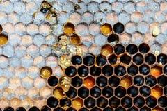 Modelo y miel del panal del hexágono de la colmena de la abeja Fotografía de archivo libre de regalías