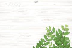 Modelo y textura de madera del tablón con las hojas del verde para el fondo natural libre illustration