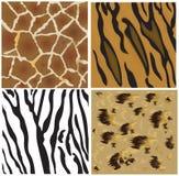 Modelos animales del tigre, del leopardo, de la jirafa y del zeb Fotografía de archivo