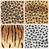 Modelos animales del tigre y del leopardo. Foto de archivo libre de regalías