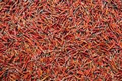 Modelos coloridos de pimientas secadas Foto de archivo