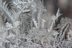 Modelos de Frost sobre el vidrio del invierno Fotos de archivo libres de regalías