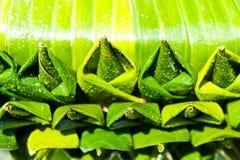 Modelos de hojas Fotografía de archivo