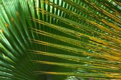 modelos de hojas de palma Imagenes de archivo