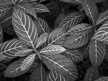 Modelos de la naturaleza en B&W Fotografía de archivo libre de regalías
