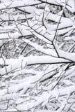 Modelos de la nieve en árboles Foto de archivo libre de regalías