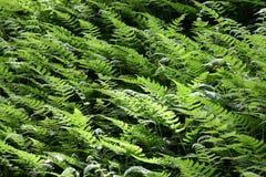 Modelos de las hojas Fotografía de archivo