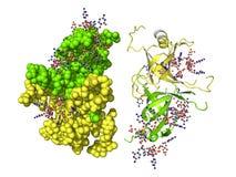 Proteína de SSB Fotografía de archivo libre de regalías