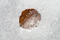 Modelos del hielo con la hoja congelada del otoño Fotografía de archivo
