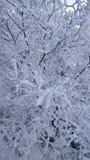 Modelos del invierno Foto de archivo libre de regalías