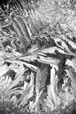 Modelos del invierno en la ventana Fotografía de archivo libre de regalías