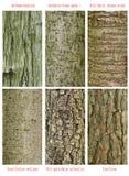 Modelos del tronco de árboles Fotos de archivo libres de regalías