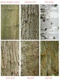 Modelos del tronco de árboles Imagen de archivo
