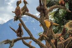 Modelos dos pássaros em uma árvore no parque Foto de Stock Royalty Free