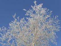 Modelos escarchados en el cielo Fotografía de archivo libre de regalías