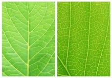 Modelos verdes de los fondos de la hoja Fotos de archivo