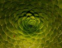 modelos y secuencias en las plantas, secuencia de Fibonacci, ratio de oro imagen de archivo libre de regalías