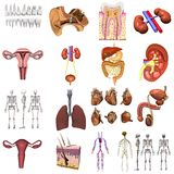 17 models of organs. Collection of 3d renders - 17 models of organs Royalty Free Stock Photo