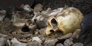 Modelschedel van mens en van de beenderenvorm kuil met donker licht De ruimte van het exemplaar stock afbeeldingen