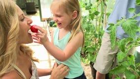 Moder och barn som skördar tomater i växthus
