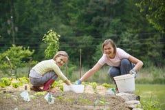 Moder och dotter som arbetar i grönsakträdgården royaltyfri foto