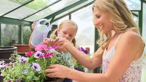 Moder och dotter som bevattnar växter i växthus stock video